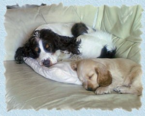 Ruby-and-Millie[1]